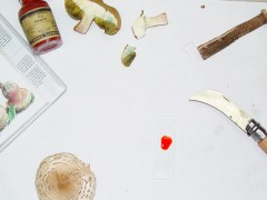 Clasificando setas en el laboratorio
