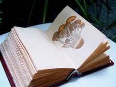 libro de setas Wilson